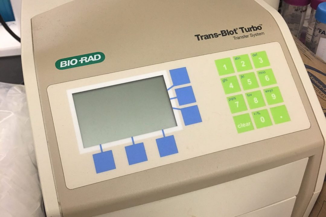 18. Western blot trasnfer unit